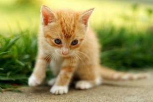 anak kucing cute