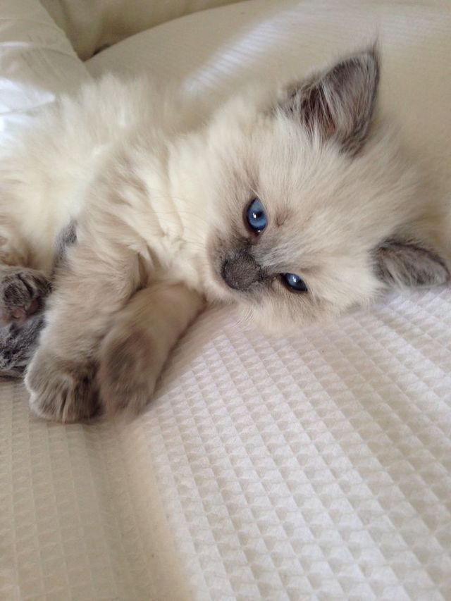 Kittens Fluffy tumblr pictures best photo