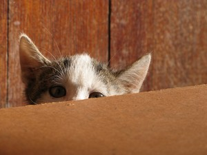 cute mèo con playing hide and seek