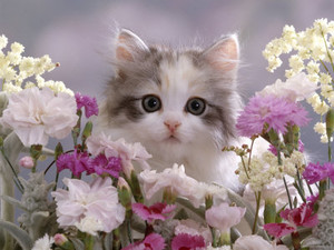 cute gattini with fiori