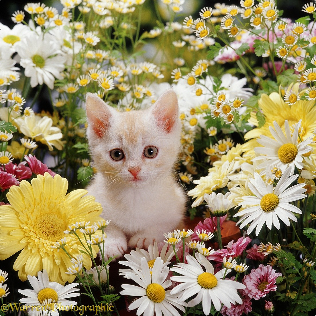 Yorkshirerose Images Cute Kittens With Flowers Hd Wallpaper And