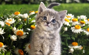 cute anak kucing with Bunga
