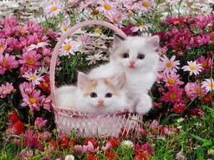 cute chatons with fleurs