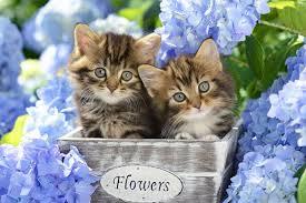 cute Kätzchen with Blumen