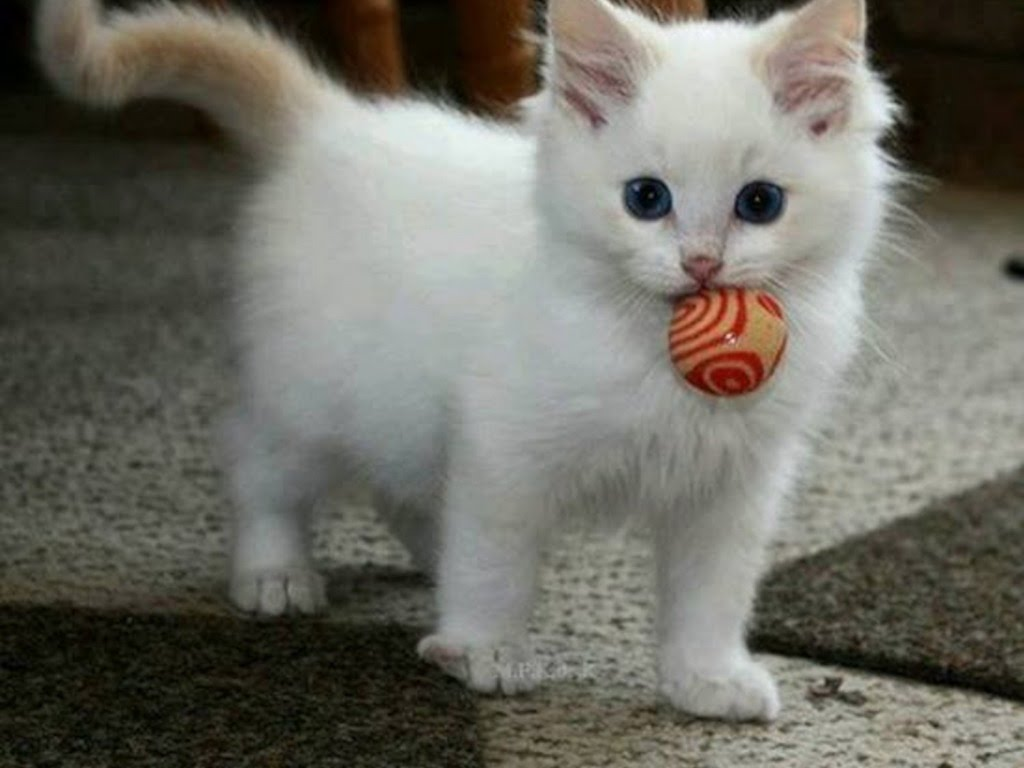 Cute Kittens Images Cute Kitties Hd Wallpaper And Background Photos