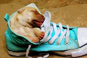 cute 강아지 sleeping