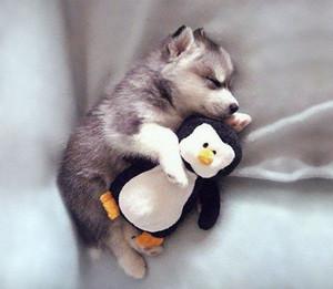 cute mtoto wa mbwa sleeping