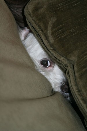 cute पिल्लें trying to hide