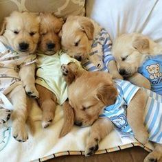 cute puppies wearing clothes