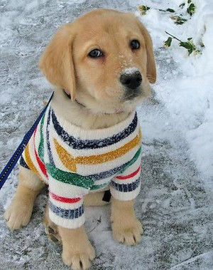 cute पिल्लें wearing clothes