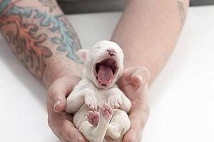 cute chó con yawning