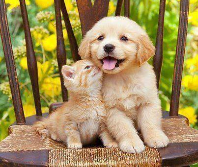 greyswan618 images cute puppy and kitten wallpaper and background