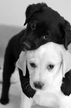 cute anak anjing, anjing hugs