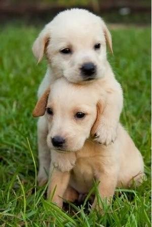 cute welpe hugs