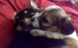 cute कुत्ते का बच्चा, पिल्ला hugs