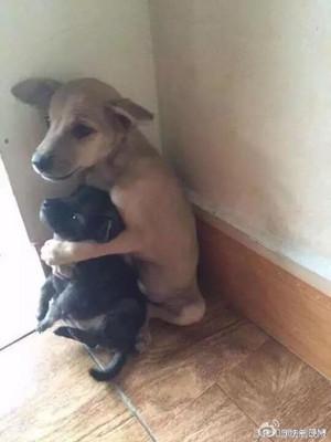 cute cachorro, filhote de cachorro hugs