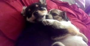 cute chiot hugs