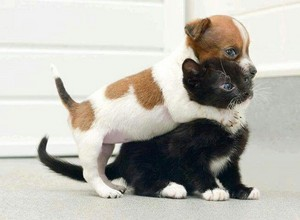 cute chiot hugs