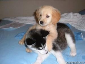 cute tuta hugs