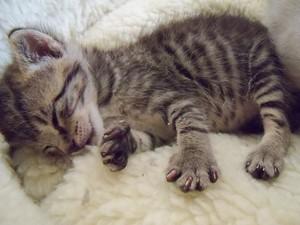 cute,tiny newborn 고양이