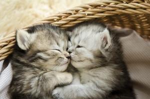 cute,tiny newborn gatinhos