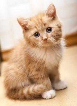 cutest Kätzchen ever!!!!