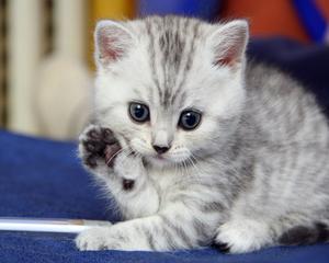 cutest बिल्ली के बच्चे ever!!!!