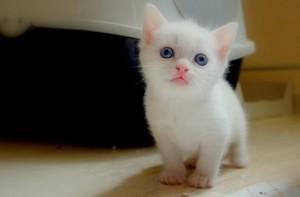 cutest Котята ever!!!!
