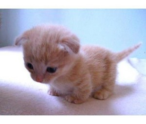 cutest chatons ever!!!!
