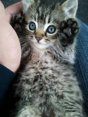 cutest mèo con ever!!!!