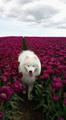 doggo - random photo