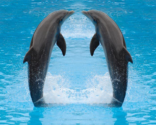 Dolphins Images Wallpaper And Background Photos