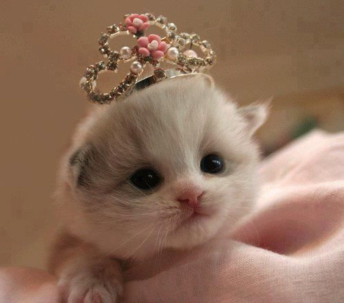 Little Princess Kittens Photo 41492699 Fanpop