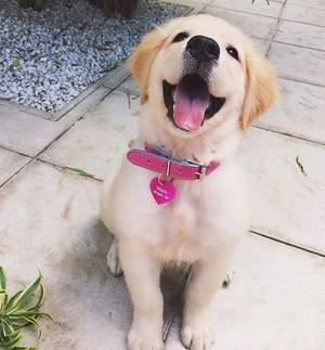 happy 小狗