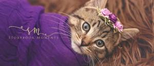 gatinhos and crowns