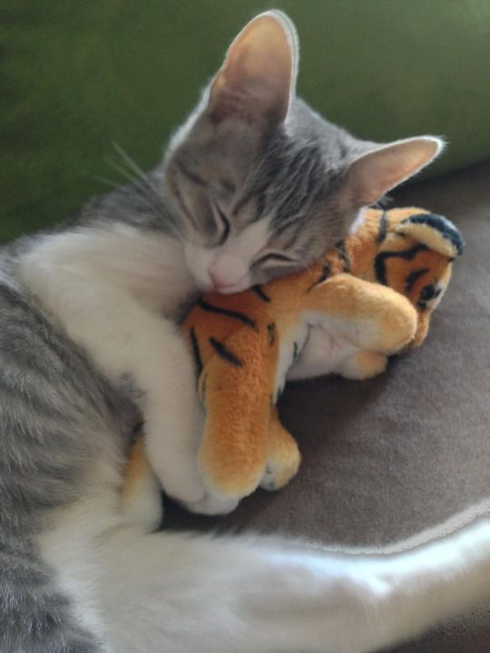 Cute Kittens Images Kittens Sleeping With A Stuffed Animal Hd