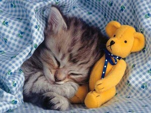 kittens sleeping with a stuffed animal