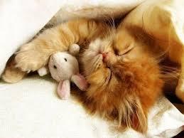 mga kuting sleeping with a stuffed animal