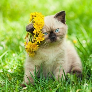 kittens with flowers