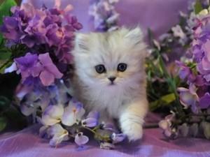 kitties and Blumen