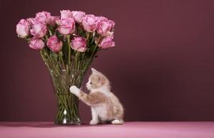 kitties and ফুলেরডালি