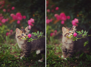 kitties and 花