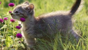 kitties and flowers