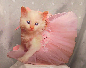 kitty ballerina