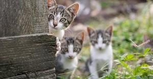 mischievous kittens