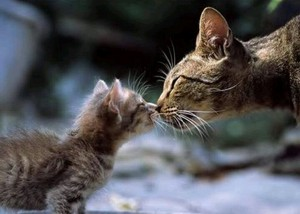 muah...sweet kitten kisses