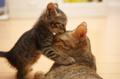 muah...sweet kitten kisses - kittens photo