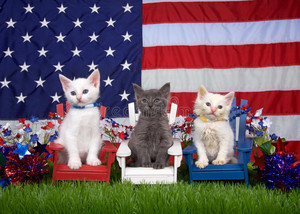 patriotic A-MEOW-CATS
