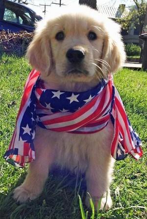 patriotic पिल्लें