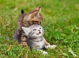 playful Котята